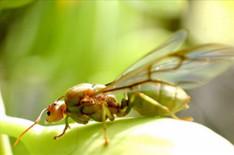 ความรู้เกี่ยวกับมด (Knowledge about Ants) 2