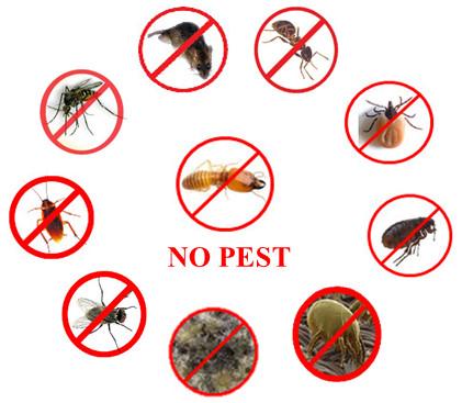 วงจร No Pest