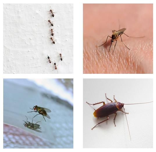 20 วิธีไล่แมลงแบบธรรมชาติ…ภูมิปัญญาชาวบ้านไม่ง้อสารเคมี