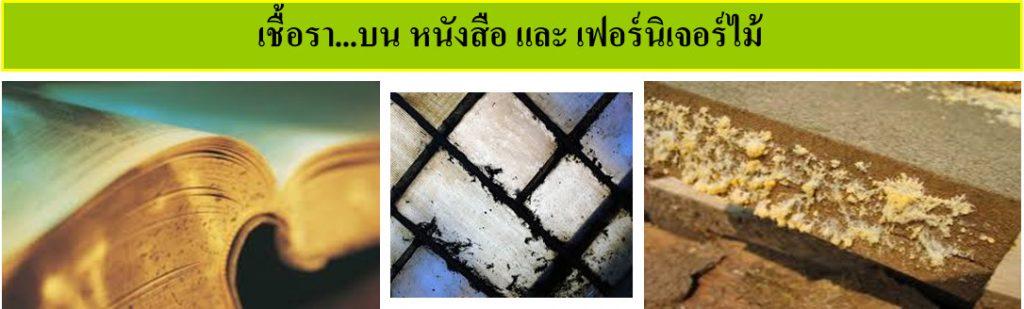 ความรู้เกี่ยวกับเชื้อรา (Knowledge about Fungus) 4
