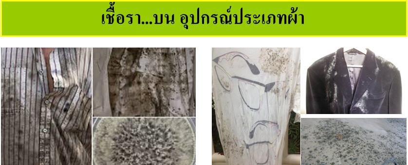 ความรู้เกี่ยวกับเชื้อรา (Knowledge about Fungus) 6