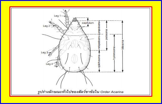 ความรู้เกี่ยวกับเห็บหมัด (Knowledge about Flea Tick) 1