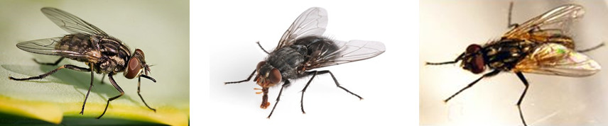 ความรู้เกี่ยวกับแมลงวัน