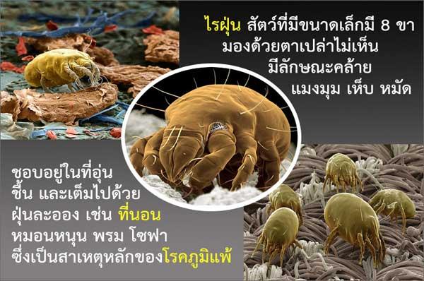 ความรู้เกี่ยวกับไรฝุ่น (Knowledge about Dust Mite) 1