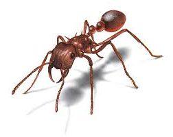 ความรู้เกี่ยวกับมด (Knowledge about Ants) 8