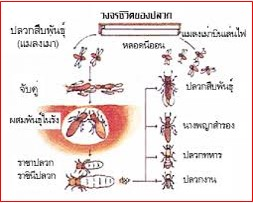 ความรู้เกี่ยวกับปลวก (Knowledge about Termites) 3