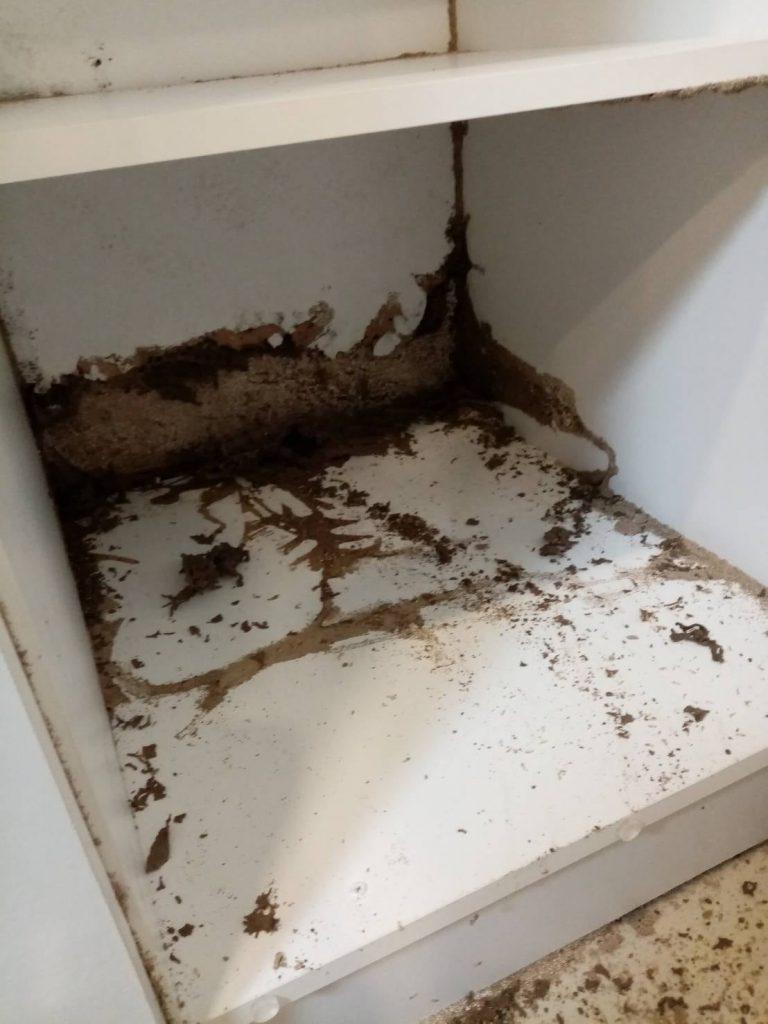 บริการกำจัดปลวก (Termites Services) 4