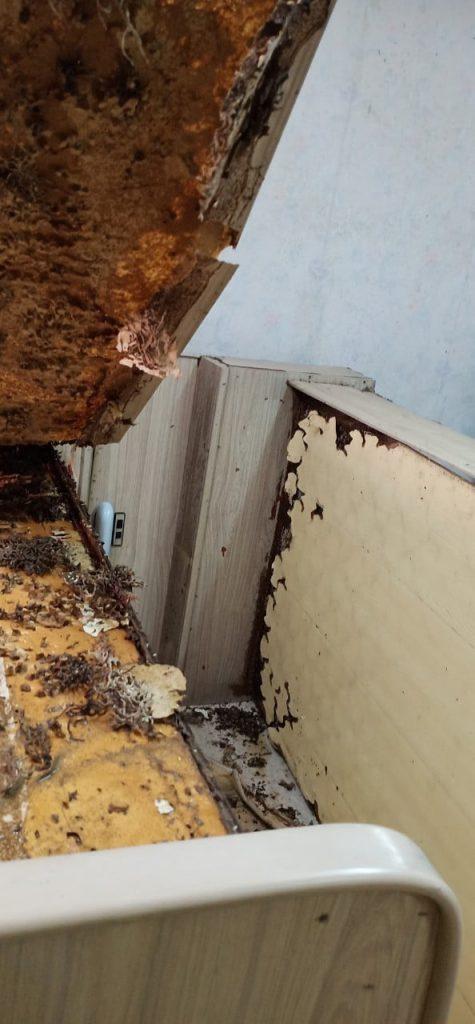 บริการกำจัดปลวก (Termites Services) 3
