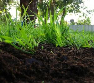ปลวกสวน กับ ปลวกใต้ดิน มาทำความรู้จักกันหน่อย 4