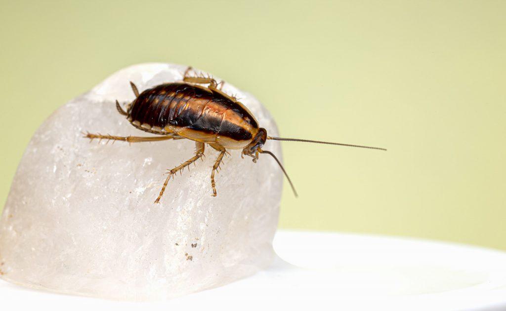 บริการกำจัดแมลงสาบ (Cockroach Removal Services) 1