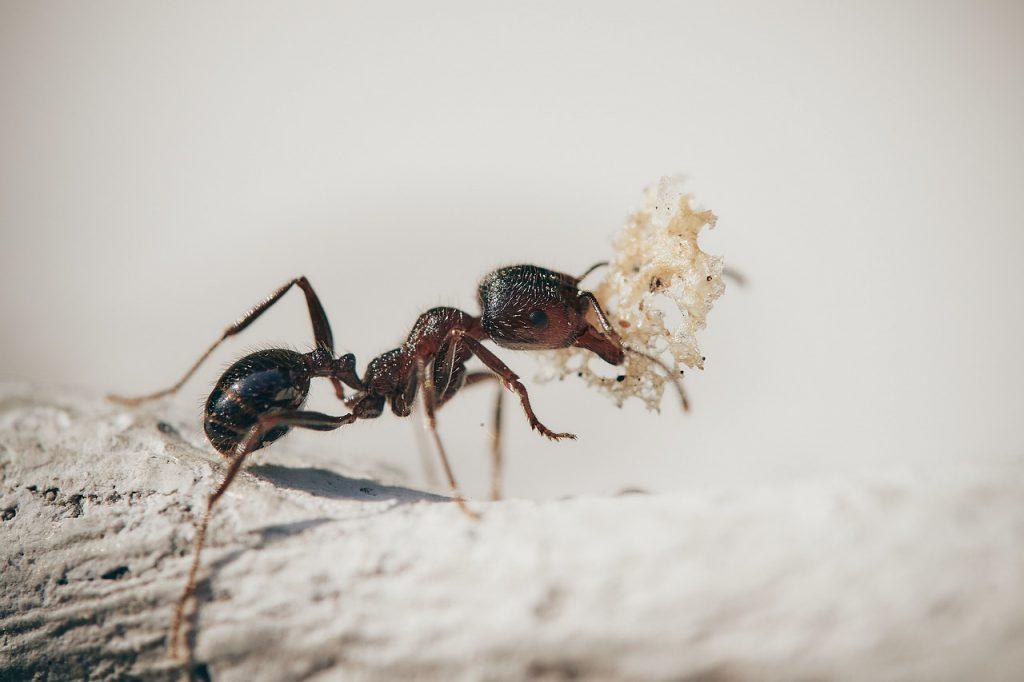 บริการกำจัดมด (Ants Removal Services) 1