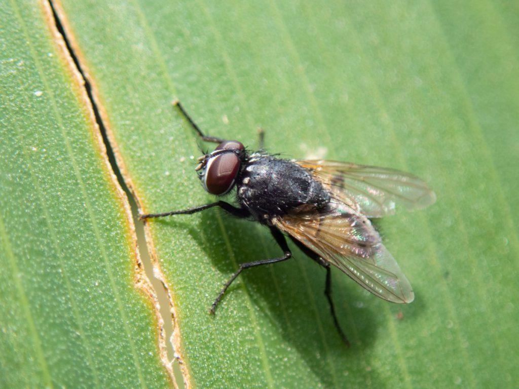 แมลงในบ้าน 1